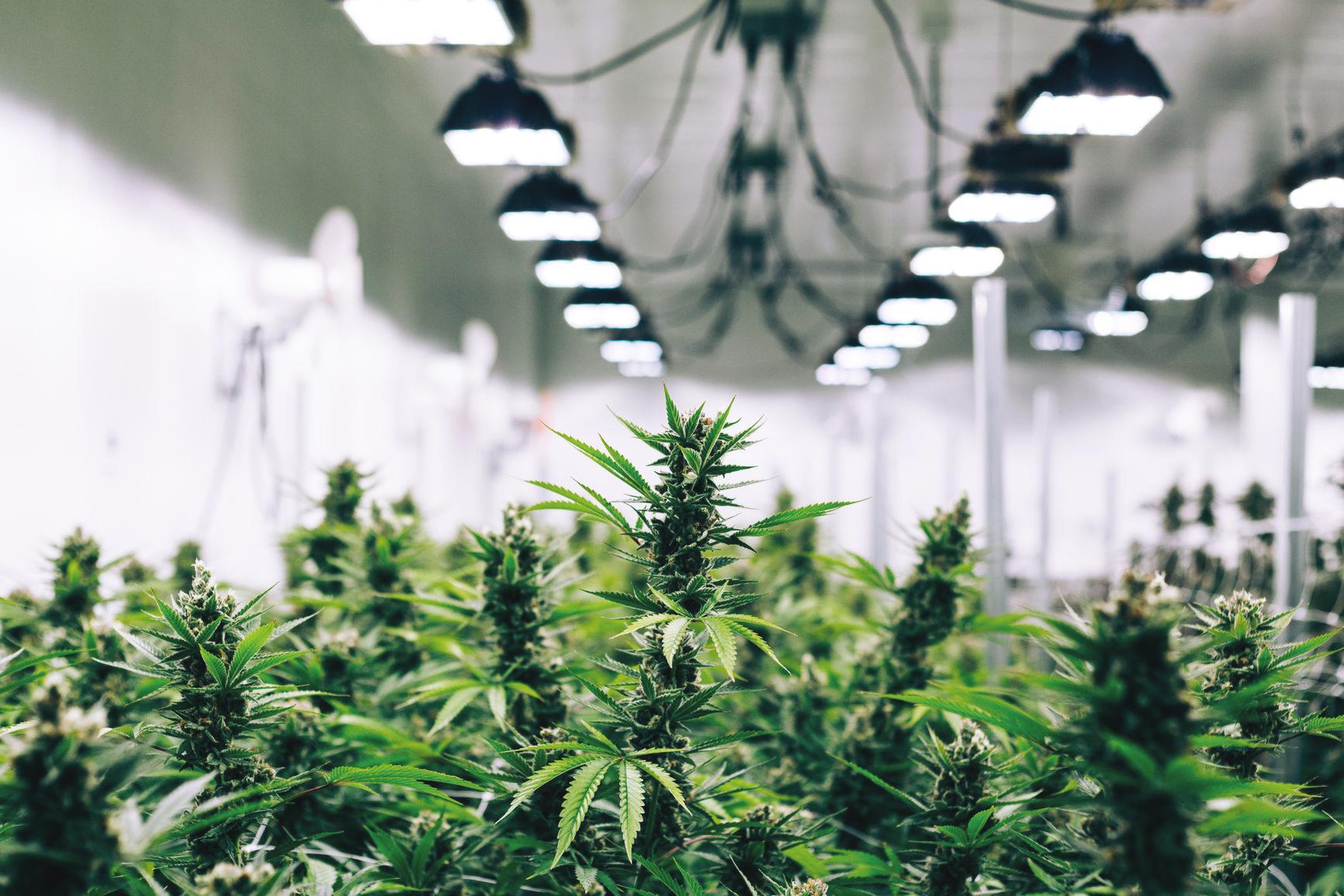 Cannabis-Warehouse